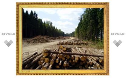 Тульская область на 3-м месте с конца по управлению лесным фондом