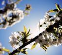 Погода в Туле 21 апреля: до 13 градусов тепла, сухо и ветрено