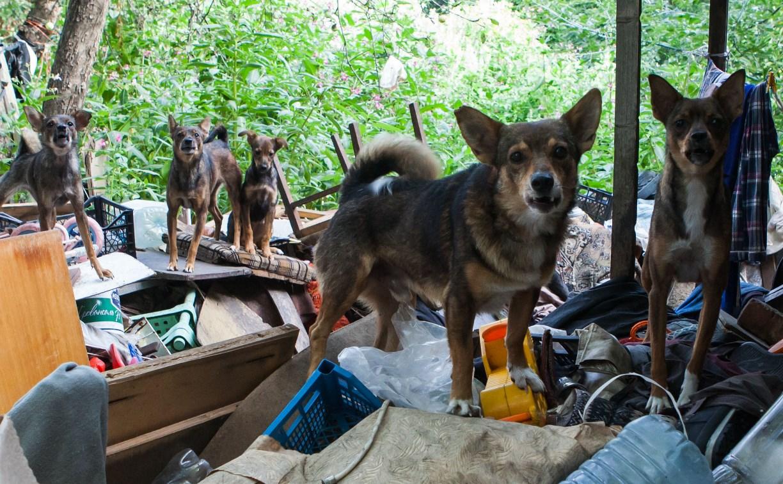Жители тульского Заречья боятся выходить на улицу из-за своры собак