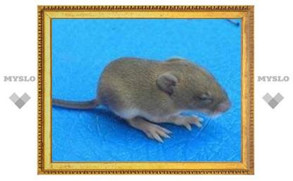Слепые от рождения мыши обрели зрение благодаря водорослям