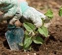 С 2015 года тульские садоводы станут участниками «Народного бюджета»