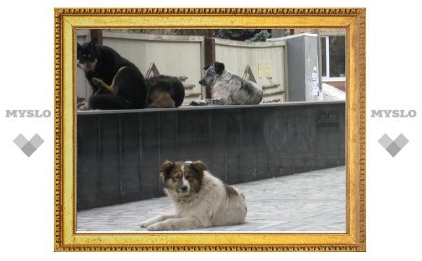 Работники администрации лично знакомы со всеми собаками города