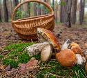 В Тульской области в лесу заблудился грибник