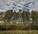 Метеопредупреждение: днем в Тульской области ожидается град с сильным ветром