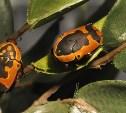 В Тульском экзотариуме посетителям покажут тараканов «автомобильчиков»