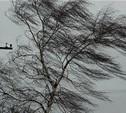 Сильный ветер в Плавске Тульской области повалил деревья и повредил крыши домов