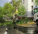 В Туле убирают поваленные ветром деревья