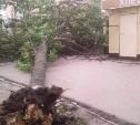 В Туле возле детской поликлиники упало дерево