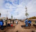 Около 1500 лип украсят улицы Тулы в следующем году