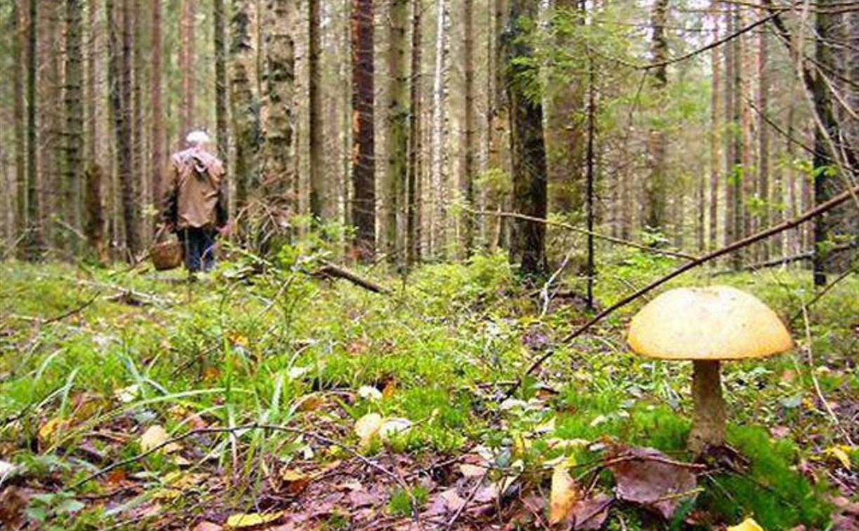 Пенсионерка, заблудившаяся в лесу в Щёкинском районе, найдена живой