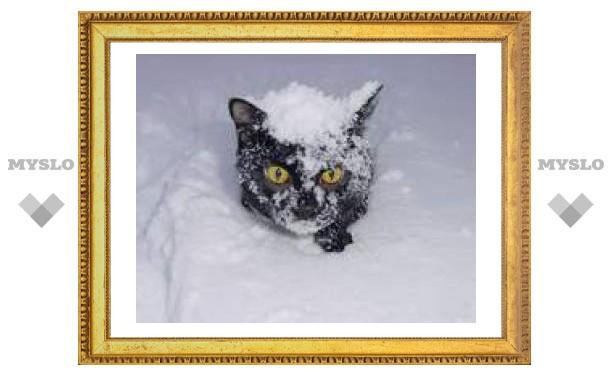 30 ноября: кувыркаются по белу снегу