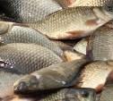 За незаконный вылов рыбы может грозить до пяти лет тюрьмы