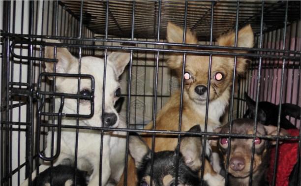 Банда похитителей собак отправится за решётку