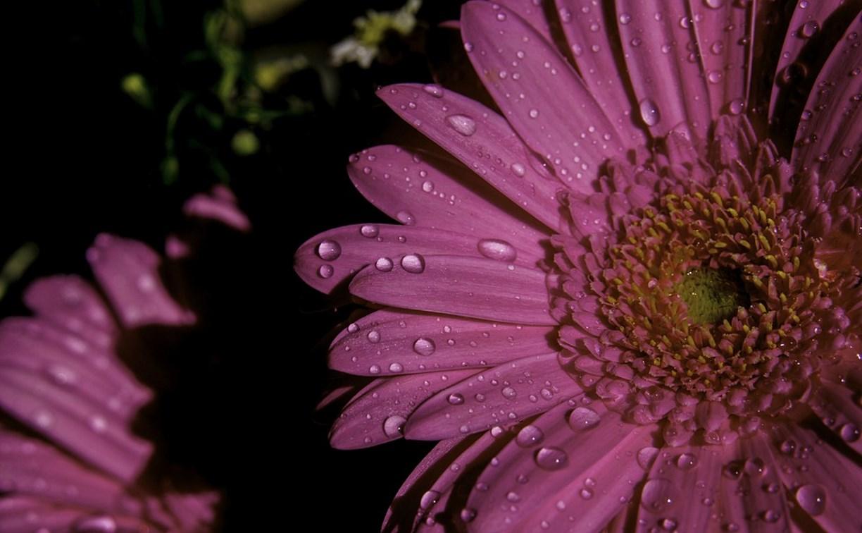 Погода в Туле 8 марта: возможен небольшой дождь