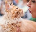 Международная выставка кошек в Туле: фоторепортаж