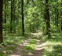 Полицейские Заокского района помогли заблудившимся в лесу москвичкам с детьми