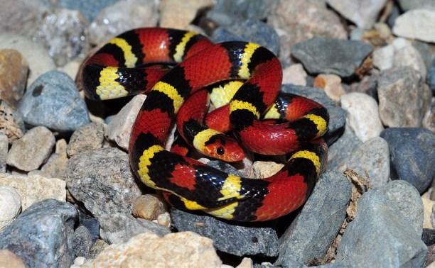 В Тульском экзотариуме пройдёт показ змеиной моды