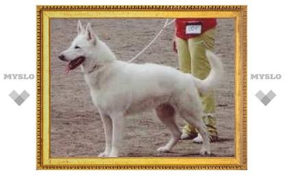 В Туле пропала собака редкой породы