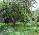 Тулячка предложила превратить яблоневый сад на ул. Серова в благоустроенный сквер