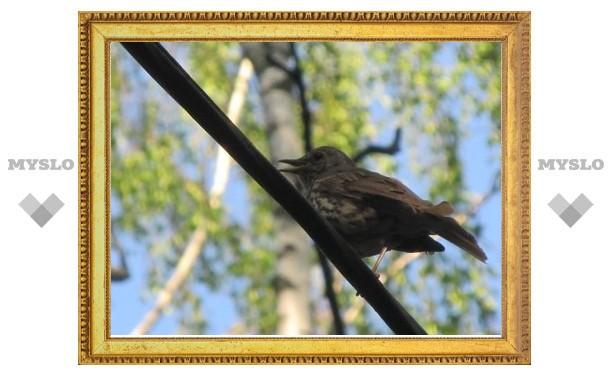 В Центральном парке Тулы появились соловьи