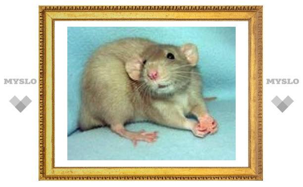 24 марта: Мыши на поле - не к добру