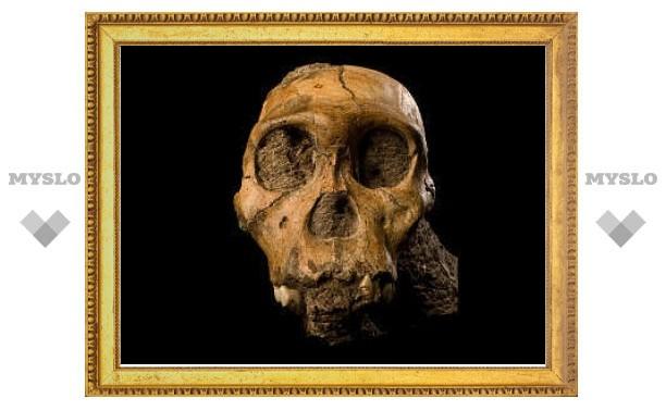 """""""Недостающему звену"""" человеческой эволюции сделали томографию"""