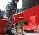 Перед матчем «Арсенал» – «Урал» стадион обследуют кинологи