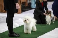 Выставка собак в Туле 14.04.19, Фото: 5