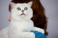 Выставка кошек. 4 и 5 апреля 2015 года в ГКЗ., Фото: 110
