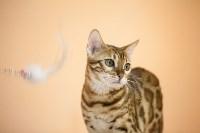 В Туле прошла выставка «Пряничные кошки» , Фото: 113