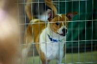 В Центральном парке Тулы проходит фестиваль помощи животным, Фото: 13
