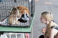 III благотворительный фестиваль помощи животным, Фото: 8