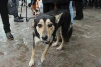 Более 8000 туляков требуют запретить убийство бездомных животных, Фото: 20