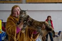 Выставка кошек в ГКЗ. 26 марта 2016 года, Фото: 81