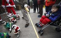 Рождественские пингвины, Фото: 3
