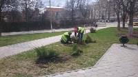 Высадка деревьев в Советском районе Тулы , Фото: 3