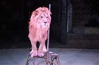 Новая программа в Тульском цирке «Нильские львы». 12 марта 2014, Фото: 18
