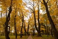 Золотая осень в Туле-2019, Фото: 25