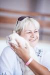 """Выставка """"Пряничные кошки"""". 15-16 августа 2015 года., Фото: 37"""