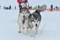 Праздник северных собак на Куликовом поле , Фото: 83