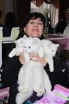 В Туле прошла международная выставка кошек, Фото: 60