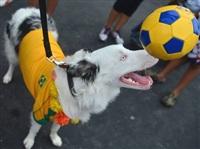 Собачий карнавал, Фото: 1