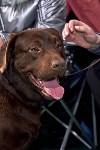 Выставка собак в Туле 26.01, Фото: 10