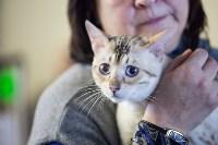 В Туле прошла выставка «Пряничные кошки» , Фото: 41
