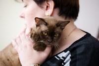 Выставка кошек. 4 и 5 апреля 2015 года в ГКЗ., Фото: 7