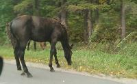 Табун лошадей у Сеженского леса, Фото: 1