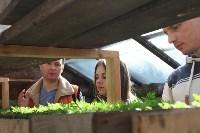 Молодежный парламент восстанавливает старинную толстовскую теплицу в Ясной Поляне, Фото: 7