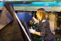 Миллион разных роз: как устроена цветочная теплица, Фото: 48