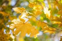 Золотая осень в Тульской области, Фото: 73