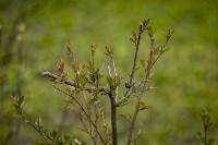 Весна 2020 в Туле: трели птиц и первые цветы, Фото: 44
